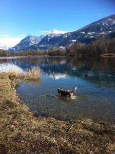 Truffo am Lac de la Brèche