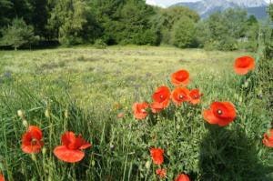 34 Blumenwiese Montorge