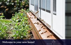 36 Bienen-Welcome-Home-zwei-630x400