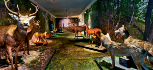 musee-de-la-nature-sion