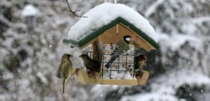 vogel-fuettern-winter_lbv_ingo_rittscher-810x394
