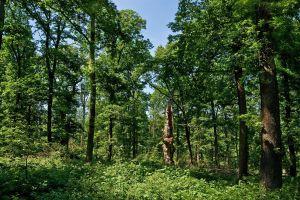 Eichenwälder im Solling