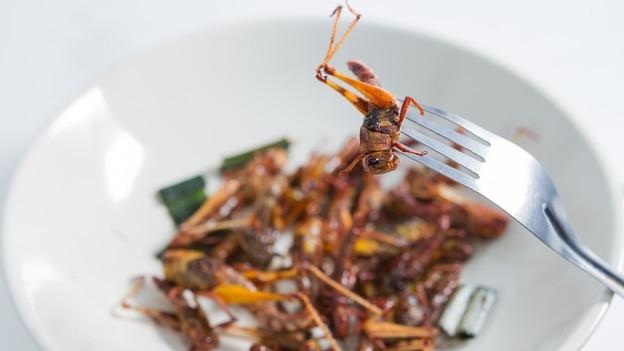 Insekt an GAbel