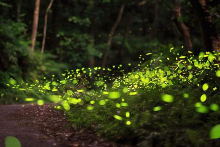Glühwürmchen 2.jpg